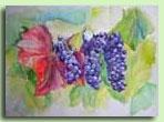 Виноград рисуют пастелью 48